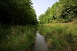 üppiges Grün und Bäume entlang des frei fließenden Bachs